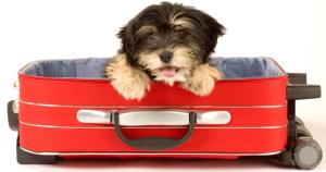 Vakantie met uw dier