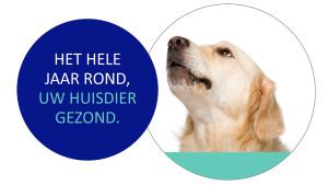HZP afbeelding hond2